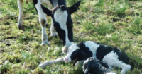 The-Vet-Group-Farm-Calving-First-Aid-4