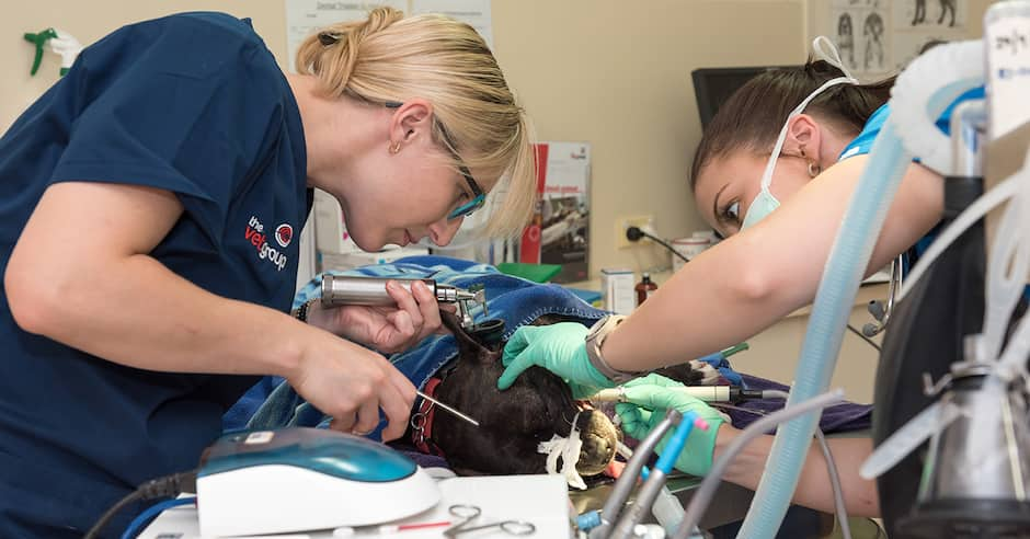 The-Vet-Group-Dental-Care-1
