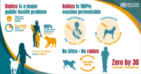 The Vet Group World Rabies Day FB