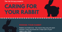 The Vet Group presents Caring for you Rabbit (1)