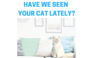 HAVE WE SEEN YOUR CAT LATELY_