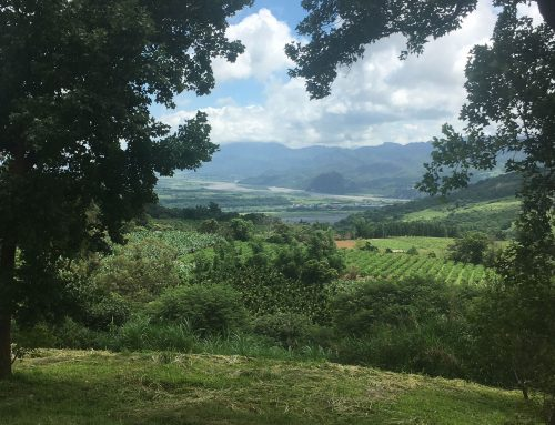 Dairying in Taiwan – food for thought