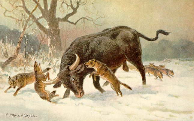 Heinrish Harter's painting of an Auroch fighting wolves