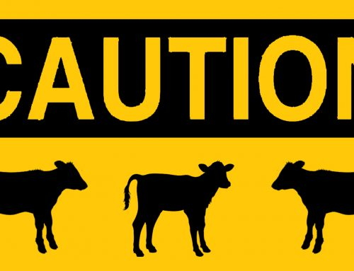 Caution: avoiding abamectin toxicity in calves!