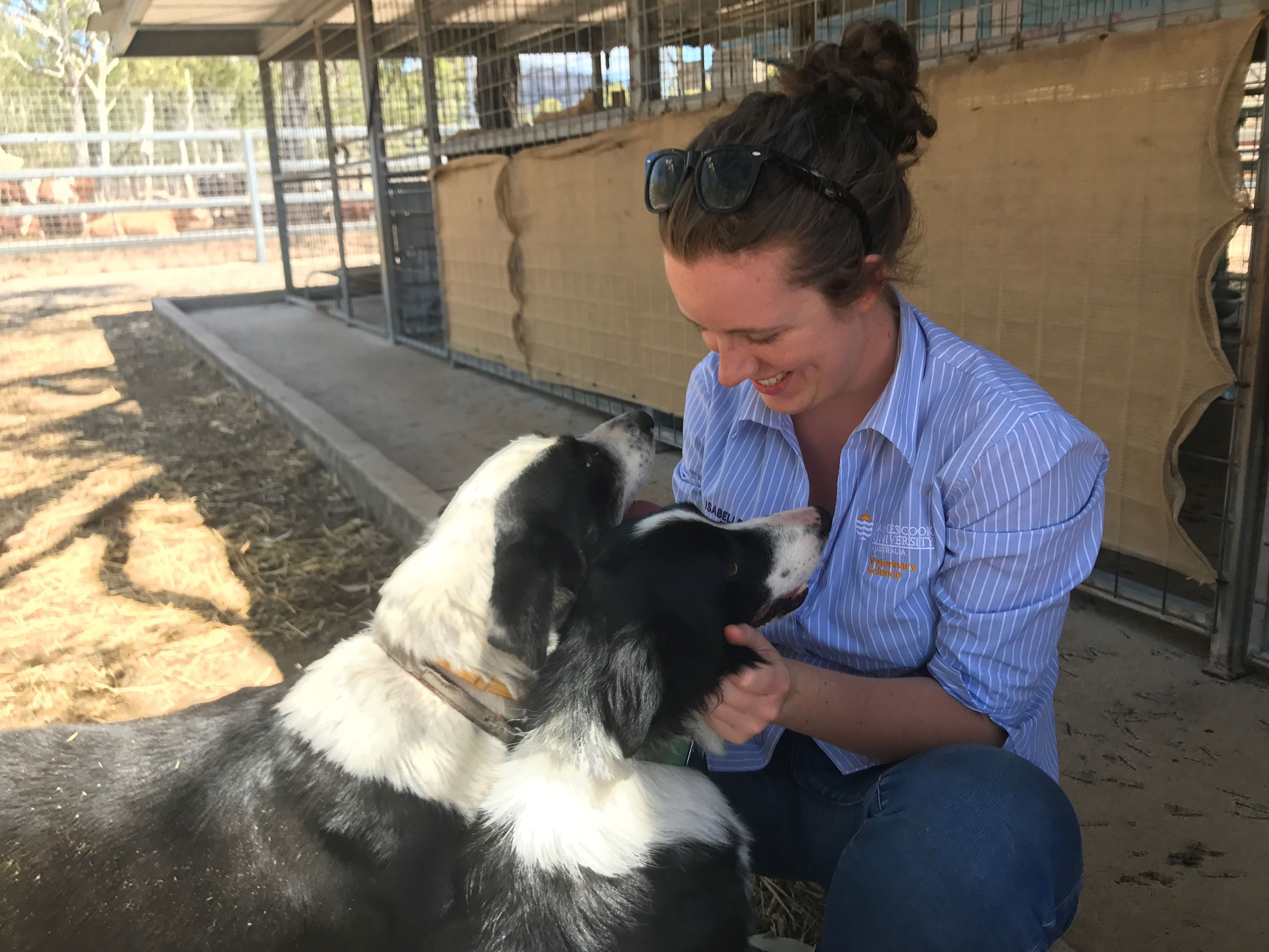 Vet student patting two border collie dogs