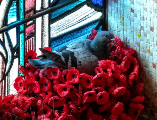 Of poppies and pigeons…