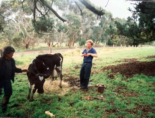 50 years of dairy vet-ting!