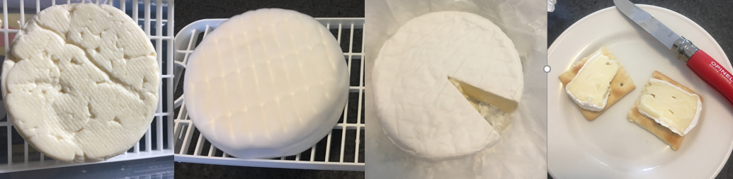 a picture showing the progression of camembert cheese maturation