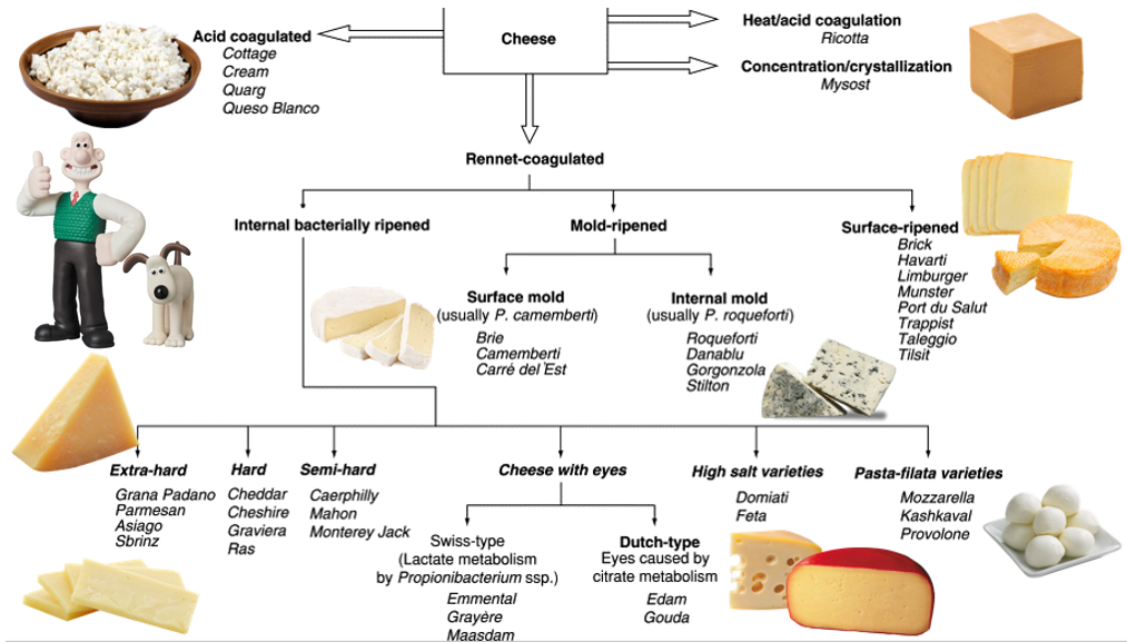 flow chart of different cheese types